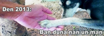 billbord voor dieren