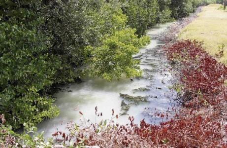 Door het stilstaand water sterven de vissen waardoor de larven de kans krijgen om zich tot muggen te ontwikkelen.