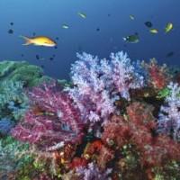 Organisaties slaan alarm over conditie van Caribisch koraal Foto     Thinkstock