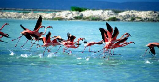 Flamingo-zoutpannen