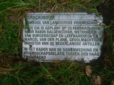 Curaçaoboom in Den Haag verdwenen   Foto    Maurits Burgers