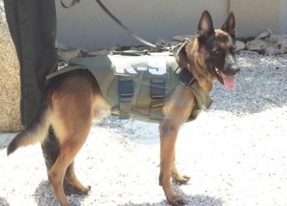 Surveillancehonden Aruba beschermd met vesten | Foto NoticiaCla.com