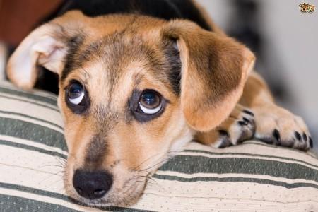 Puppy's knuffelen tijdens Carf Meet & Greet
