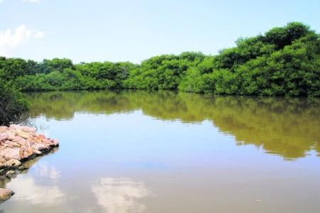 Mangrove park   Amigoe