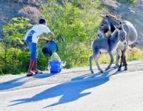 A school kid giving the donkeys water.